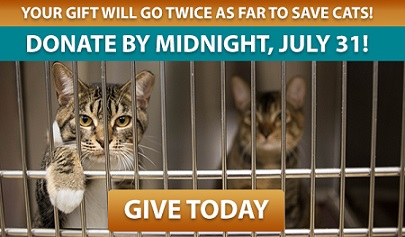 Your gift will go twice as far to help us save cats! Donate by midnight, July 31.