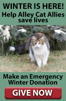 Winter is here! Help us save lives by making an Emergency Winter Donation