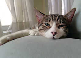 Cat lounging on couch