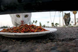 Two Cats Prowling for Food