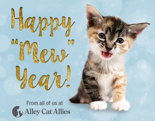 Happy Mew Year from Alley Cat Allies!