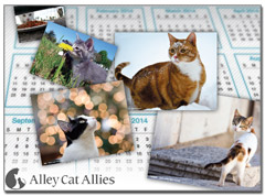 2013-14 Alley Cat Allies 15-month Calendar