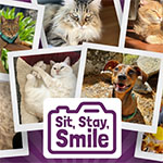 2021 Calendar - Sit, Stay, Smile (Mail Delivery)