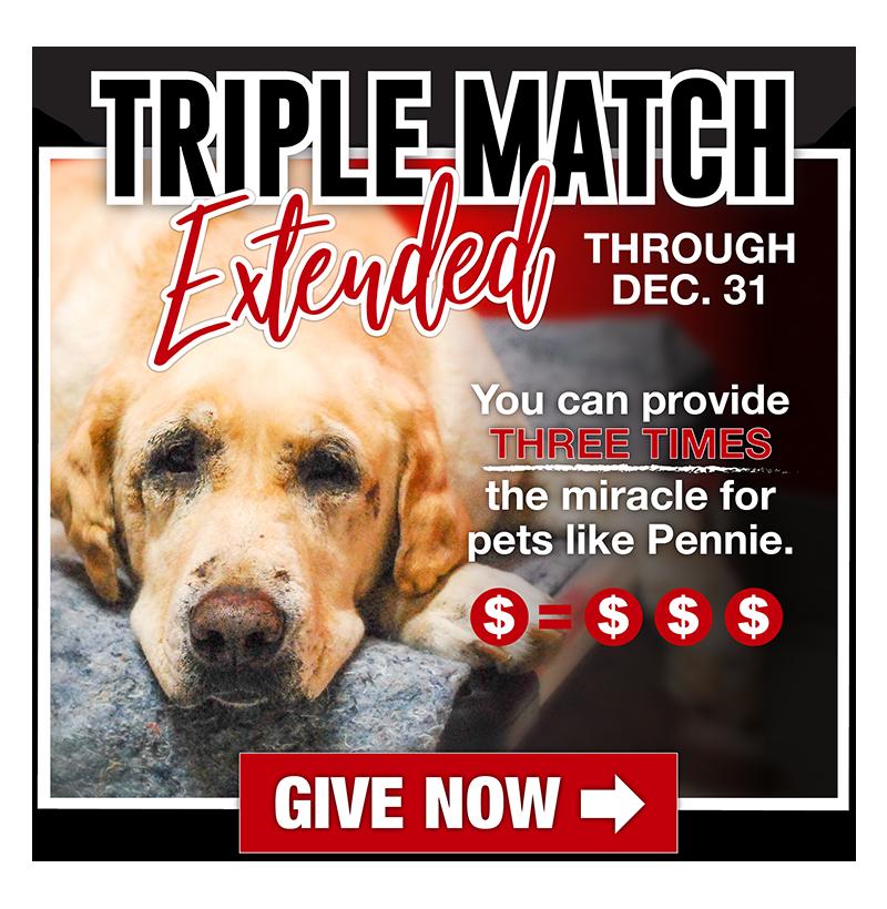 Adopt A Dog Animal Rescue League Of Iowa