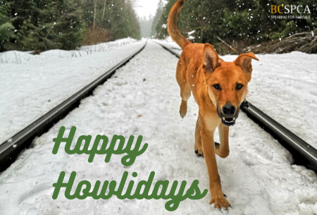 Happy Howlidays dog out in the snow