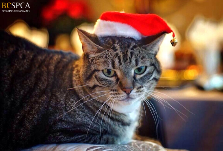 Cat in santa hat
