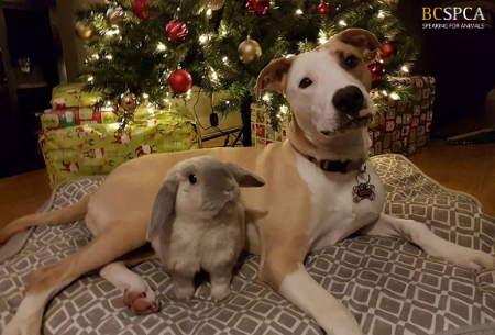 Dog and his bunny under a christmas tree