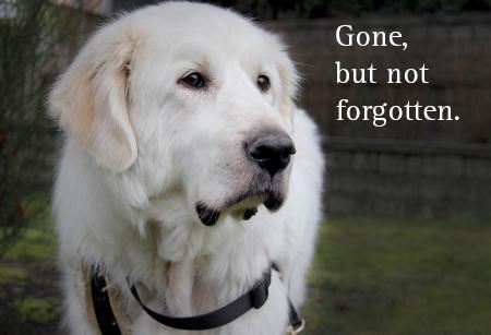 2015 memorial ecard - dog Ben