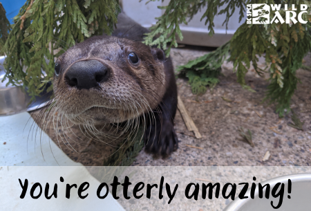 You're otterly amazing