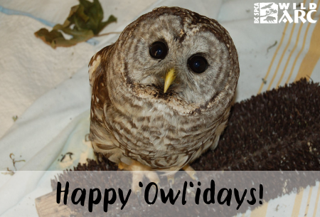 Happy Owl'idays