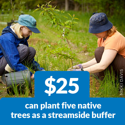 $25 can plant five native trees as a streamside buffer