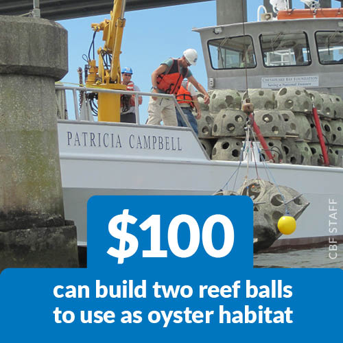 $100 can build two reef balls to use as oyster habitat