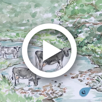 Illustration of cows standing in stream.