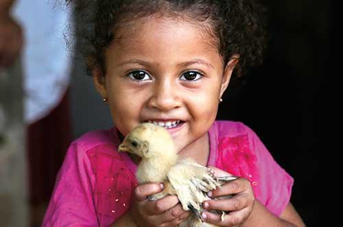 20 chicks to provide eggs