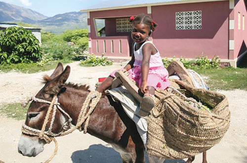 A donkey for transportation