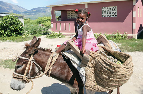 A donkey for transportation