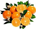 Click here for more information about 20lbs of Local, Organic Oranges from G & S Groves