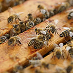 Click here for more information about 2018/11/04 - Beekeeping: Hive Tour