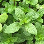Click here for more information about 2018/03/24 - Savor the Flavor: Cooking with Herbs