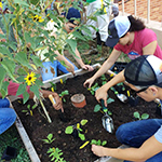 Click here for more information about 2017/04/25 & 2017/04/26 - Building Strong Garden Teams