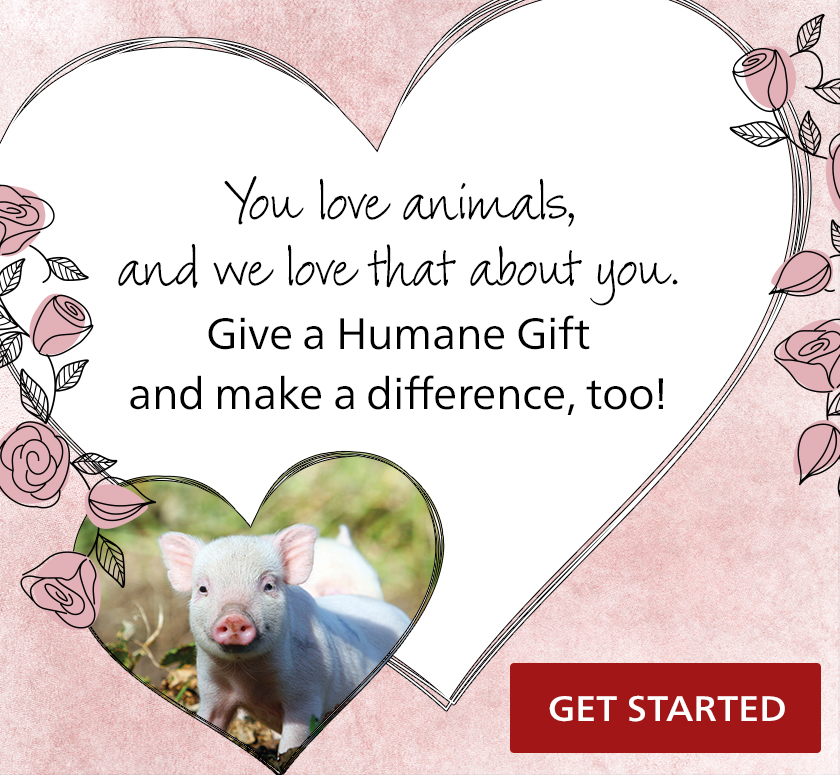 HSI: Give your loved one a Humane Gift!