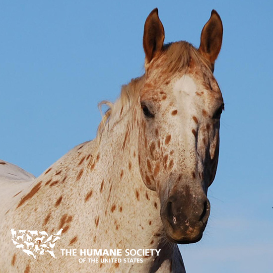lawsuit filed to block horse slaughter   the humane