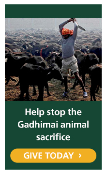 Help us end the Gadhimai mass animal sacrifice