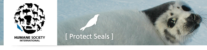 Humane Society International - Protect Seals