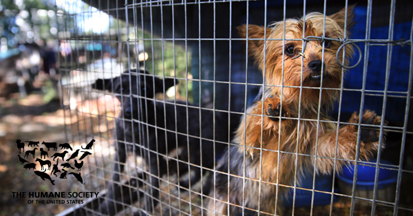 Stop Puppy Mills | Give a Gift - The Humane Society of the United States