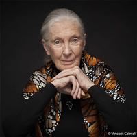 MFA Awardee - Dr. Jane Goodall