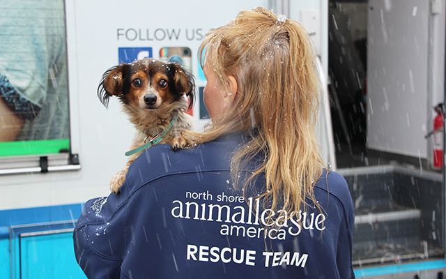 47 Dogs & Puppies Rescued from Midwest