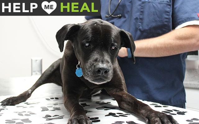 Help Delilah Heal