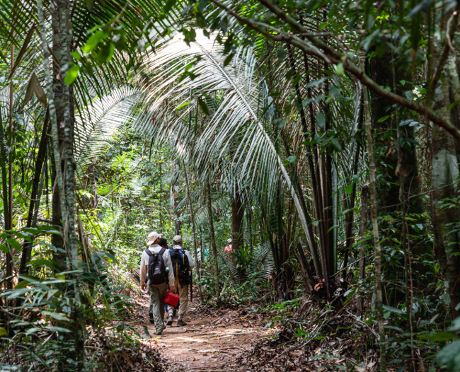 Scientists walking through an Amazonian rain forest