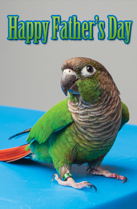 Happy Father's Day - Bird