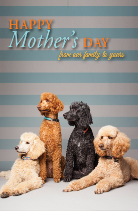 Happy Mother's Day - Dog