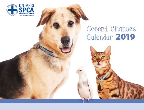2019 Second Chances Calendar