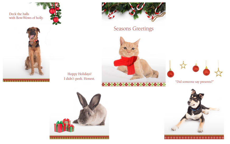 2017 Animal-Themed Holiday Cards