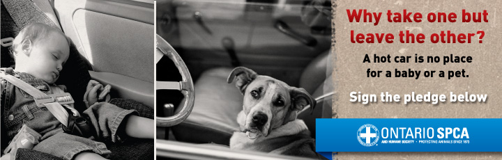 Why take one but leave the other? PLEDGE to NOT leave your pet in your vehicle!