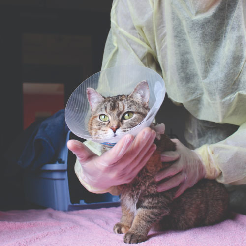 Click here for more information about Spay/Neuter a Cat or Kitten