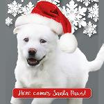 "Click here for more information about 10-pk ""Here comes Santa Paws"" cards"
