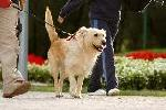 Click here for more information about Dog Walking Program