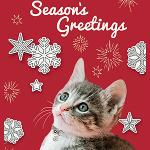 "Click here for more information about 10-pk ""Season's Greetings"" cards"