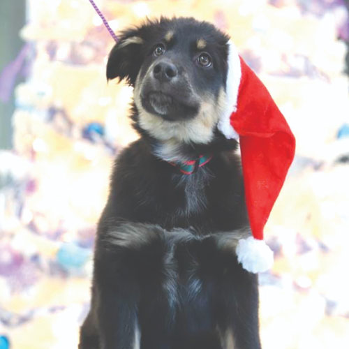 Click here for more information about Holiday Pack for a Dog
