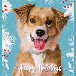 "Click here for more information about 10-pk ""Happy Holidays"" cards"