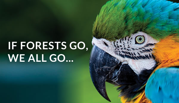 If Forests Go, We All Go…