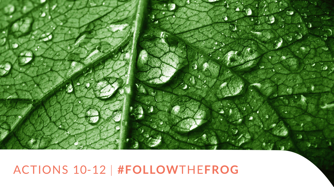Actions 10-12 | #FollowTheFrog