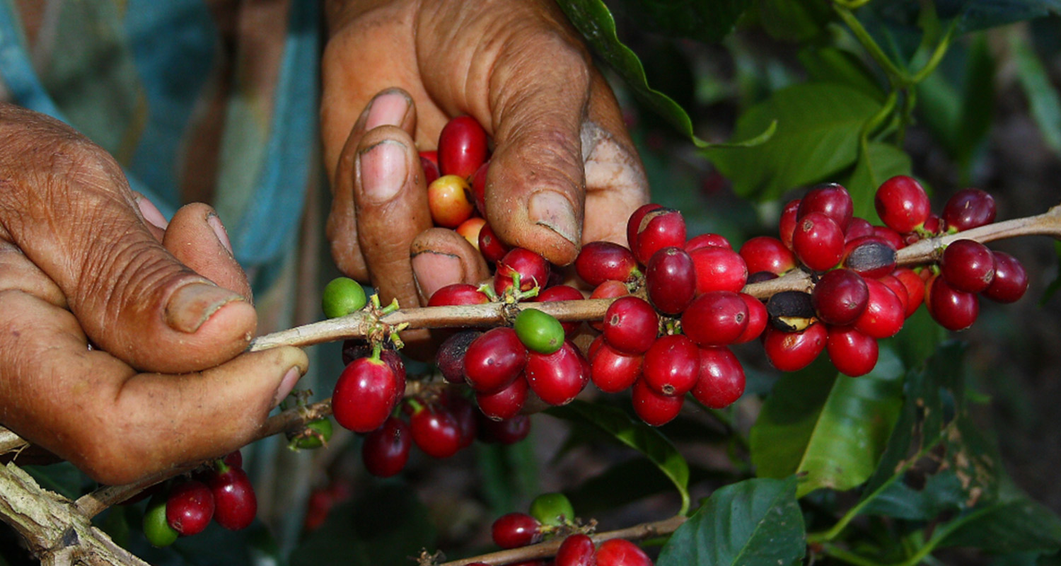 The Rainforest Alliance Statement on Current Low Coffee Prices