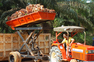 Towards a Sustainable Palm Oil Sector