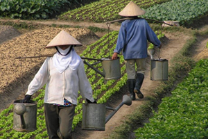 How Your Company Can Help Drive Better Livelihoods for Farmers and Workers