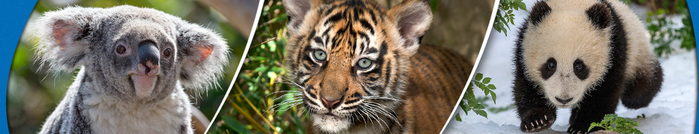 Become a Wildlife Hero - San Diego Zoo Global: Wildlife